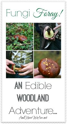 Fungi Foray! And Edible Woodland Adventure... #foraging #mushrooms #wildfood