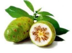 Fruta Noni - pct.c/01 kg - Araruta da Bahia.  Noni tem sido relatada a ter uma gama de benefícios de saúde para resfriados, câncer, diabetes,asma, hipertensão, dor, infecção de pele, pressão arterial alta,depressão mental, aterosclerose e artrite. Pedidos pelo site: http://ararutadabahia.lojavirtualnuvem.com.br/fruta/fruta-noni-1-kg/