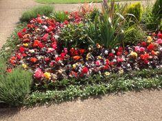 Lovely flower bed