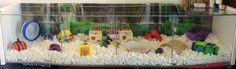 Hamster Bin Cage, Hamster House, Hamsters, Ideas, Thoughts