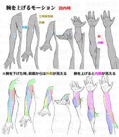 Arm Drawing, Human Anatomy Drawing, Hand Drawing Reference, Anatomy Reference, Art Reference Poses, Drawing Poses, Figure Drawing, Drawing Tips, Body Drawing Tutorial