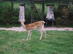 oh deer https://www.flickr.com/photos/143405688@N02/ https://www.facebook.com/OlaKwiecienPhoto/