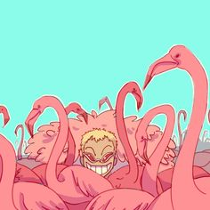 Doflamingo Wonder where he is... Hmmmm