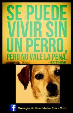 No vale la pena vivir sin un perrito.