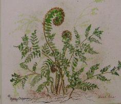 fiddlehead fern watercolor