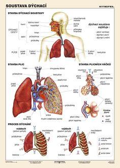 Anatomie a fyz.systému :: Zanety-dc