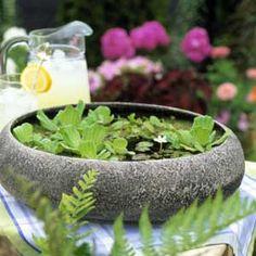 Table top water garden