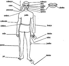 Internal Organs For Kids Free internal organs worksheet