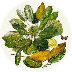 Puka Tondo Printmaking Ideas, Flora And Fauna, Limited Edition Prints, Watercolor Paintings, Digital Prints, Plant Leaves, The Originals, Flowers, Plants