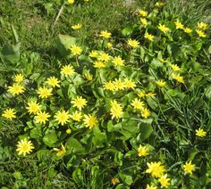 """Yellow spring """"grass"""" Yellow Springs, Countryside, Grass, Nature, Plants, Naturaleza, Grasses, Plant, Natural"""