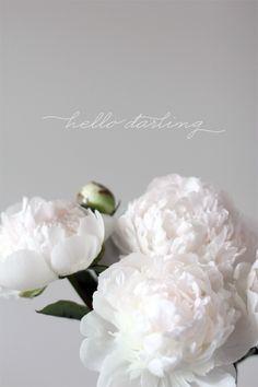 HELLO DARLINGS