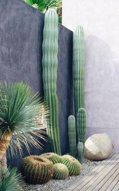 13 Desert Plants to Use When Landscaping : desert landscaping plants golden barrel cactus Succulent Outdoor, Succulent Landscaping, Landscaping Plants, Landscaping Ideas, Patio Plants, Outdoor Cactus Garden, Cacti Garden, Outdoor Pots, Outdoor Spaces