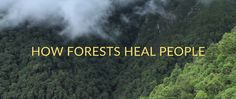 VIDEO Link.  A beautiful video (both visually and in terms of the teachings).  The forest and the sea have been two of my greatest teachers...they have also been two of my most powerful healers.