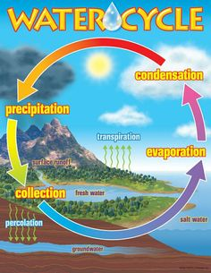 """Precipitation, collection, evaporation, condensation, and then start the cycle again. Introduce your class to the water cycle with the illustrations and activities on this chart. Extra value on back: reproducibles, tips, and information. Sturdy and durable. 17"""" x 22"""" classroom size."""