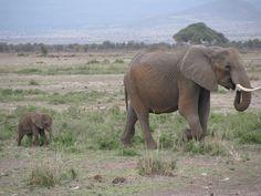 In Kenya