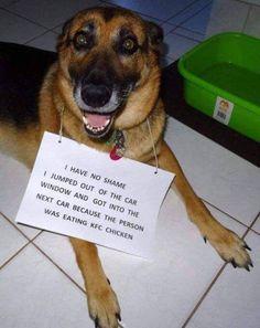 KFC and The Doggo http://ift.tt/2rZvATS