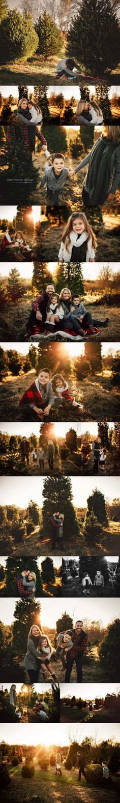 Indianapolis Family Photographer, outdoors, sunset, baby, portraits, alex morris design, outfits, portraits, photography, family photos, indiana, christmas tree farm