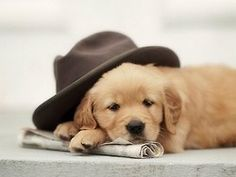 So, yeah, I rarely post pictures of puppies - the cuteness factor is a little much for me.  But this one has a fedora.  'Nuff said.