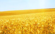 Wonderful Grain Field