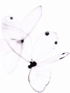 Collection of see through stuff (leaves, butterfly wings, crystals). Butterfly Kisses, Butterfly Art, Animal Photography, Fine Art Photography, Shades Of White, Black And White, Houston Museum, Fotografia Macro, Morris