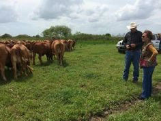 Between rain showers we got to view an outstanding herd of females and bulls at Zipperer Beefmasters in Devil's Garden, Fla. Owner Jennie Le...