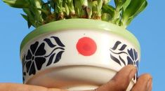 A Feng shui titka: Ettől a növénytől anyagilag is jobbá válhat a család élete - Blikk Rúzs Feng Shui, Planter Pots, Plant Pots