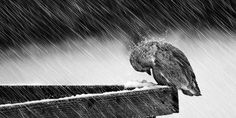Prayer Quotes: Sometimes, you just have to bow your head, say a prayer, and weather the storm Say A Prayer, This Too Shall Pass, Rainy Night, Verona, Bald Eagle, Poems, Prayers, Thing 1, Faith