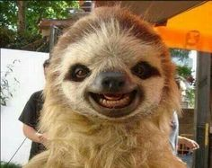 Smiling Sloth. Do you suppose that God gave animals a sense of humor too?