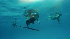 Get out of your comfort zone. We teach you how to freedive and get your first fish on a spear. https://spearfishingtoday.com/shop/learn-to-spearfish-cozumel-mexico-spearfishing-charter/