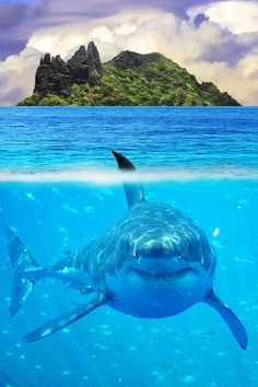 Great White Shark. Can I keep it? Pleaseeeee!!! IT'S SO FATTTT I LOVE IT!!!! And look at that face it's so cute, it looks like it's smiling hehe