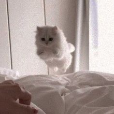 xoxo cats pets cute - Animals and pets - Katzen Fluffy Animals, Baby Animals, Cute Animals, I Love Cats, Cute Cats, Funny Cats, Grumpy Cats, Crazy Cats, Cat Icon