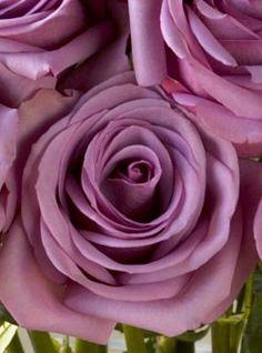 Lavender Rose Bouquet, EcoBlooms - OrganicBouquet.com