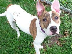 Manhattan NY.  Rose.  Female.  1 yr.  Dies in a.m.  See Urgent Part 2 on fb.***RESCUED***
