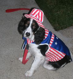 Patriotic dogs :) #akc