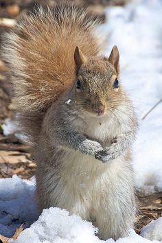 ♥ squirrel