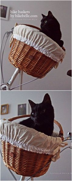 Dreamy Christmas present - this definitely makes our list! | This pretty bike basket holds up to 6kg - as proven by Marian the cat