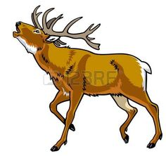 venado, ciervo rojo, ciervo, imagen vista lateral aislado sobre fondo blanco…