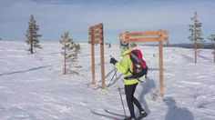 Cross-country skiing from hut to hut in Lapland, Pallas-Yllästunturi National Park - Finland, ca. 200 kilometers north from the Arctic Circle. Skiers, Arctic Circle, Cross Country Skiing, Winter Activities, Finland, Husky, National Parks, Snow, Outdoor