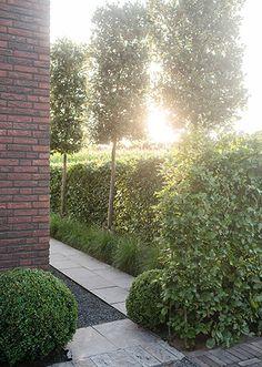 Zijtuin verspringen Outdoor Landscaping, Outdoor Gardens, Contemporary Garden Rooms, Conservatory Garden, Shade Garden, Hedges, Garden Inspiration, Land Scape, Landscape Design