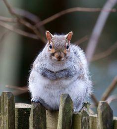 Fat animals = happy animals <3  OHMG SOOO CAYUTEEEE. HEHEHEHEE