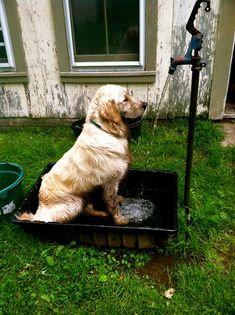 The most popular dog baths washtubs and dog bathing ideas are on pinners this summer i will create a outdoor dog wash station for sally suitable for a real dog in a real home on a real budget solutioingenieria Images