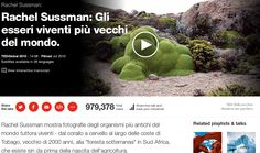 Gli esseri viventi piu' vecchi del mondo / The oldest living things in the world