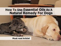 How To Use Essential Oils As A Natural Remedy For Dogs - http://www.hometipsworld.com/how-to-use-essential-oils-as-a-natural-remedy-for-dogs.html