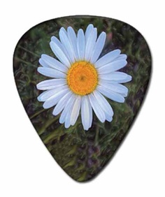 12 DAISY GUITAR PICKS Nature Flowers Jewelry