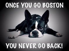 You Never Go Back! - http://bostonterrierworld.com/you-never-go-back/