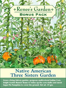Three Sisters Garden: Corn, Beans, and Squash -- the three plants feed and support each other -- ages-old Native American practice