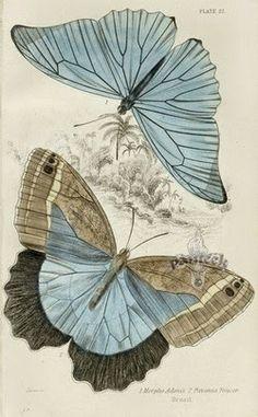 Butterflies to decoupage Images Vintage, Vintage Pictures, Vintage Cards, Vintage Paper, Vintage Butterfly, Butterfly Art, Art Papillon, Beautiful Butterflies, Botanical Prints