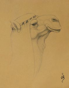 Sufi 'The Magus's Camel' by John Biccard.