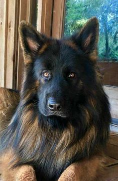 Looking for majestic dog names? Here is a collection of unique dog names. Cute Puppies, Cute Dogs, Dogs And Puppies, Doggies, Small Puppies, Funny Dogs, Animals And Pets, Cute Animals, German Shepherd Puppies