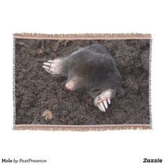 Mole Throw Blanket Photo Memories, Throw Blankets, Mole, Party Hats, Are You The One, Family Photos, Art Pieces, Cool Stuff, Animals